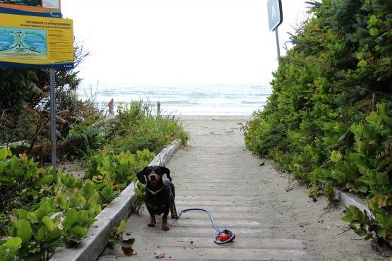 Viajar con Perro a Canadá y Cómo Kiba descubrió las ardillas