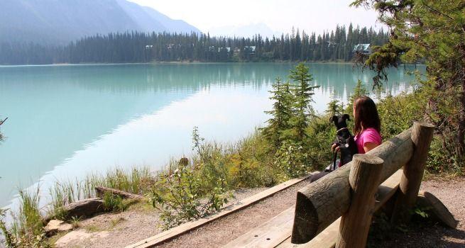 Viajar con perro a Canadá