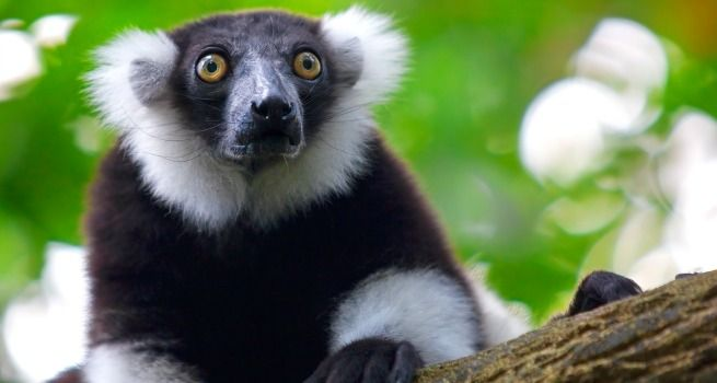 Por qué la isla de Madagascar te hará sentir especial
