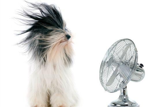 La salud de tu mascota en verano