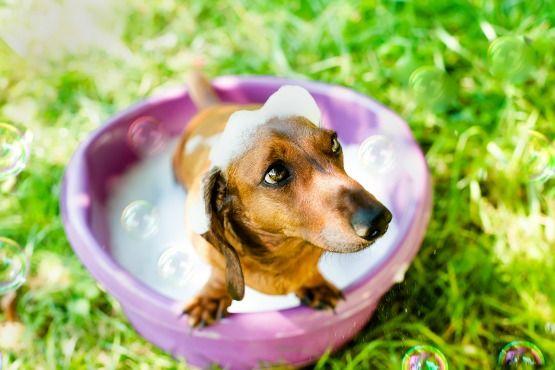 La salud de tu mascota