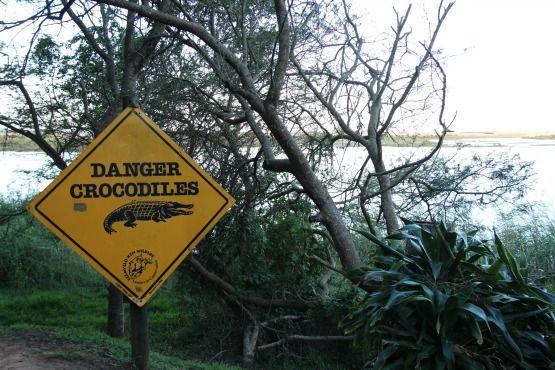cocodrilos Santa Lucia