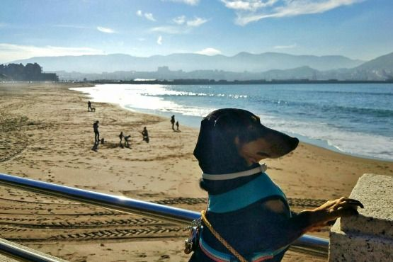 Viajar con perro Bilbao