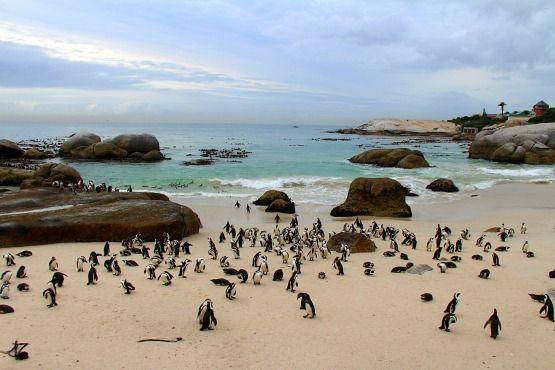 playa de los pinguinos sudafrica