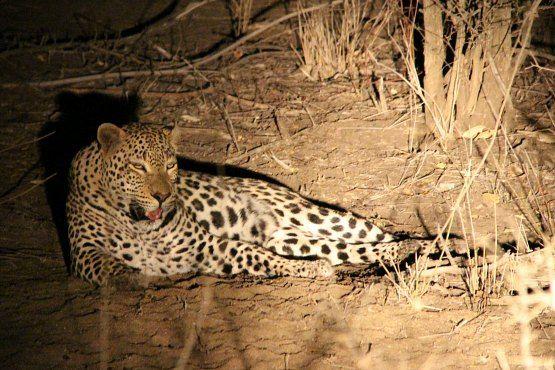 safari nocturno Sudafrica