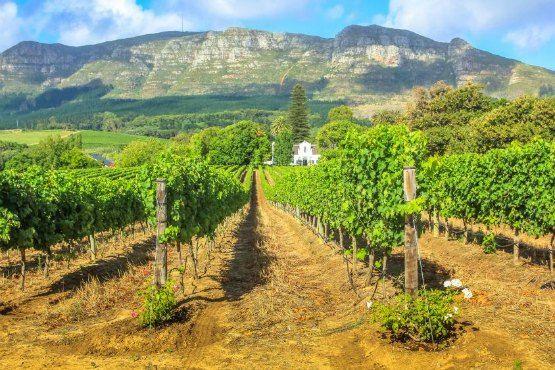 vino sudafricano