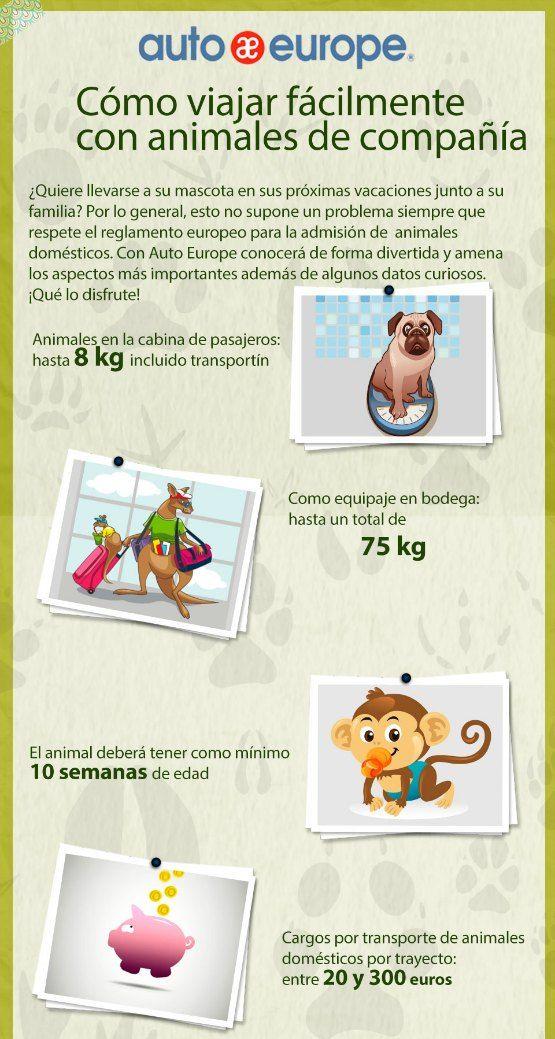 Consejos para Viajar con perro