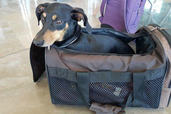 viajar con mascotas en avion
