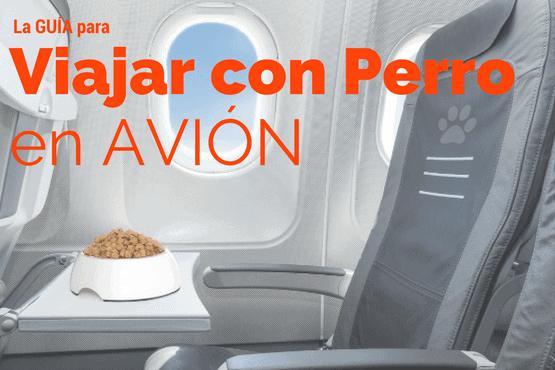 Guía para Viajar con Perro en Avión [Todo lo que necesitas