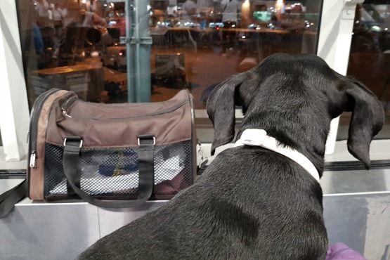 viajar con perro en cabina