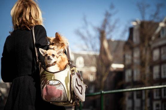 viajar con perro pequeño