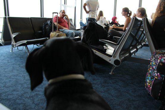 volar con mascotas