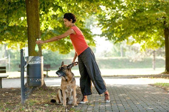 Consejos para viajar con mascotas que debes saber