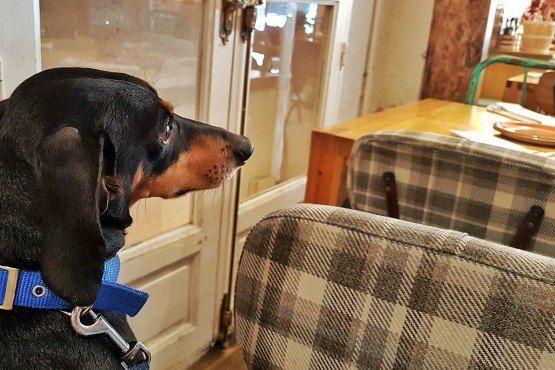 Dónde Comer en Madrid con Perro