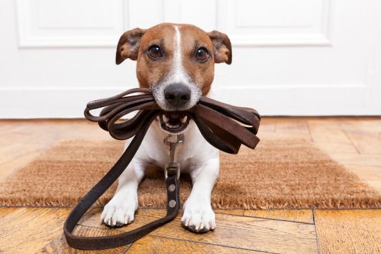 adiestramento canino