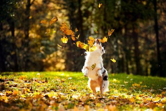 destinos dogfriendly