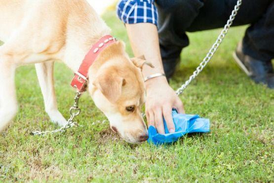 recoger las cacas de perro