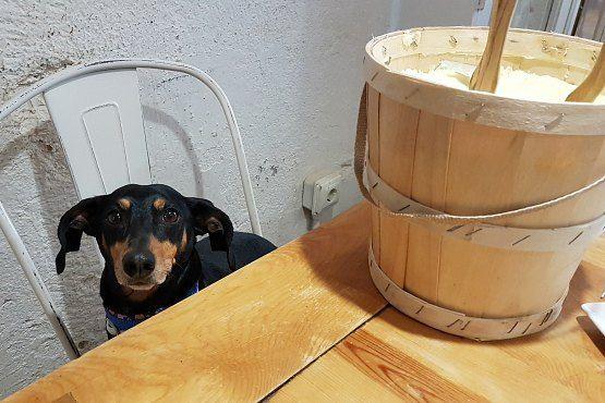 restaurantes perros madrid