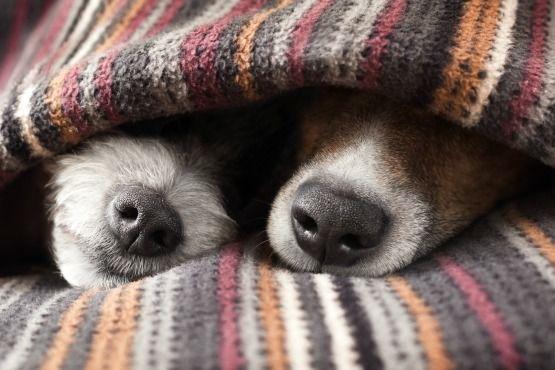 sueño de tu perro