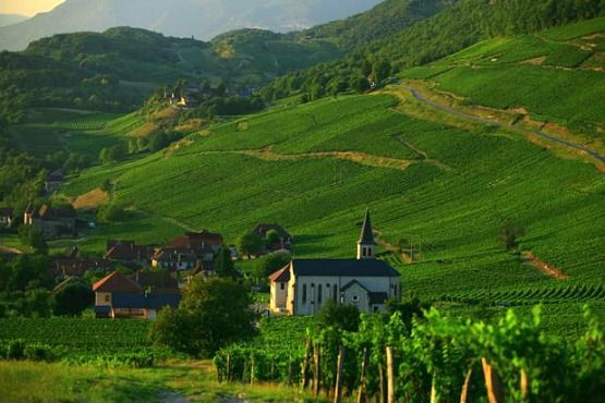 viñedos Alpes Franceses