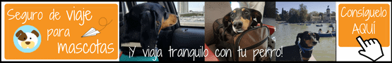 Seguros Viaje mascotas