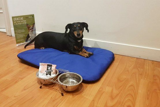 Casual Hoteles Petfriendly