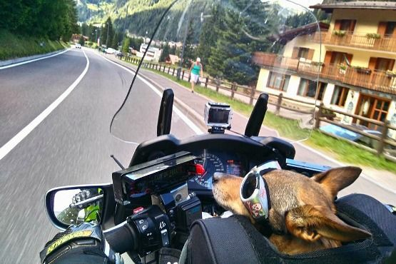 Transporte de animales en moto