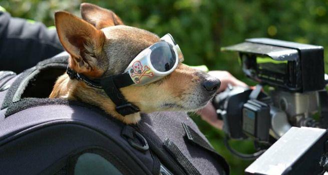 Viajar con perro en moto