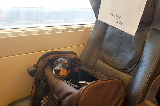 Viajar con perro en tren