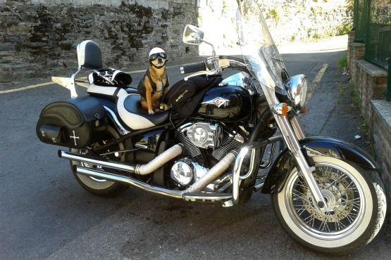 Viajar en moto con Perro Vulcan Perra Motera