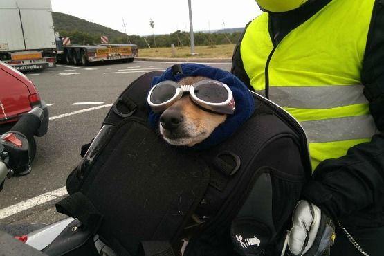 viajar en moto con tu mascota