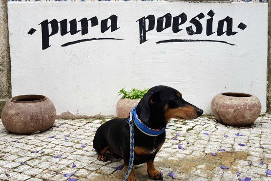 Lisboa con Perro