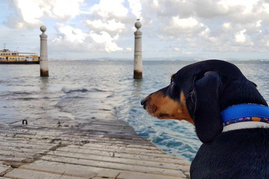Viajar con perro a Portugal