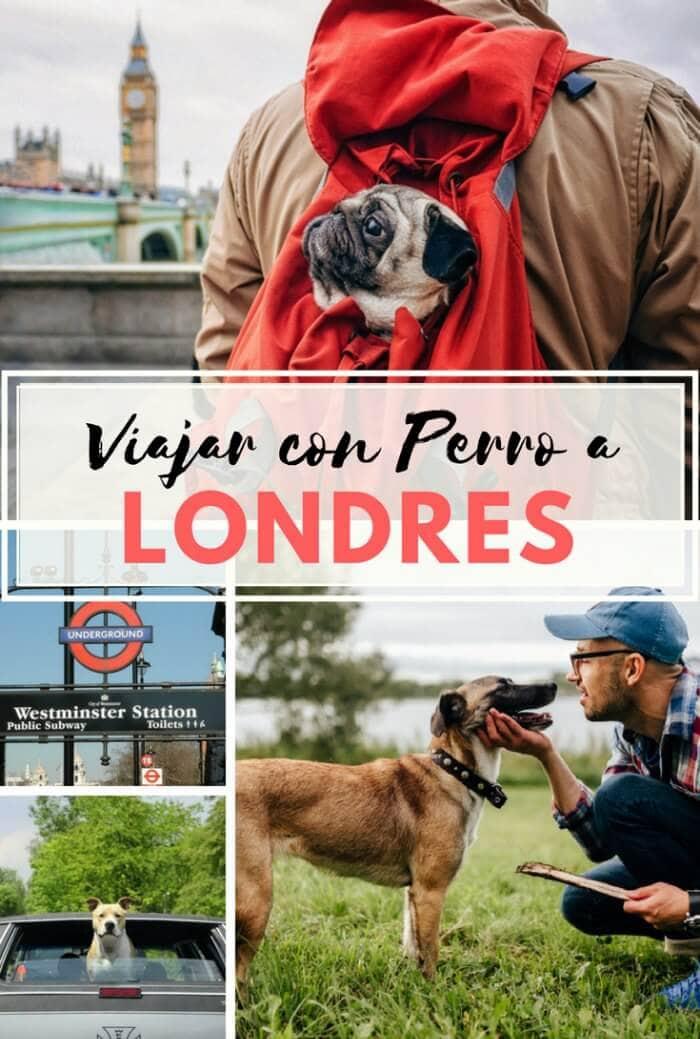 Viajar a Londres con mascota