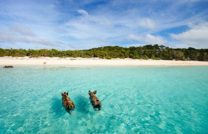 excursiones a bahamas desde miami