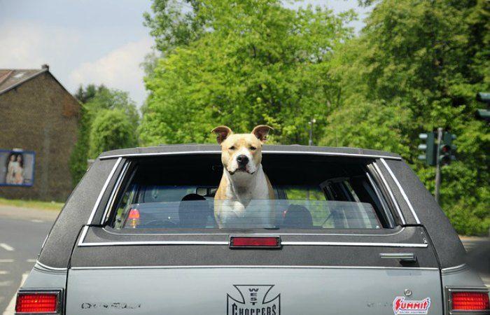 quiero viajar con mi perro a Londres