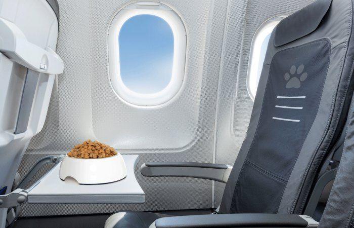 viajar a Londres con perro en avion