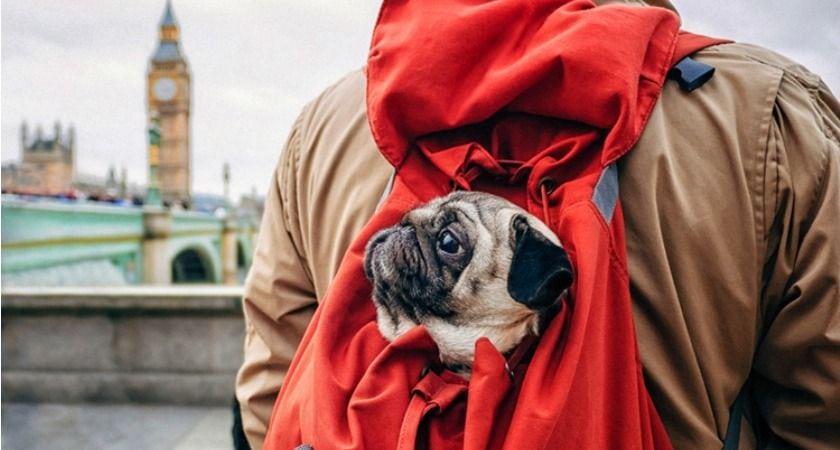 viajar a londres con perro