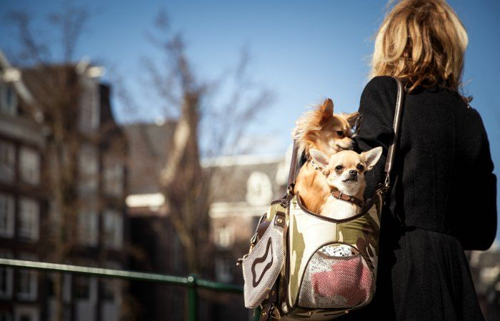 vuelos a londres con perro