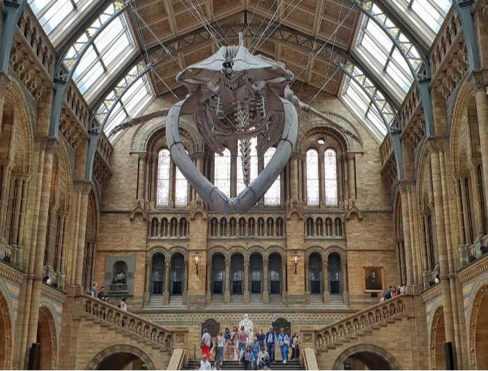 museo de ciencias naturales Londres