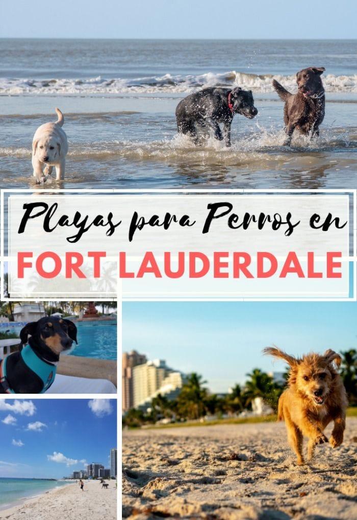 mejores playas para perros en fort lauderdale