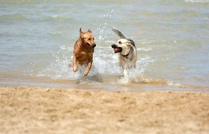 playas para perros al sur de florida