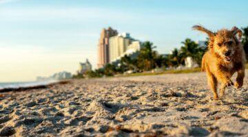 playas para perros en fort lauderdale