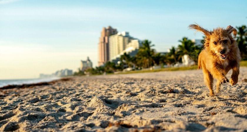 Las 3 Mejores Playas para Perros en Fort Lauderdale y alrededores