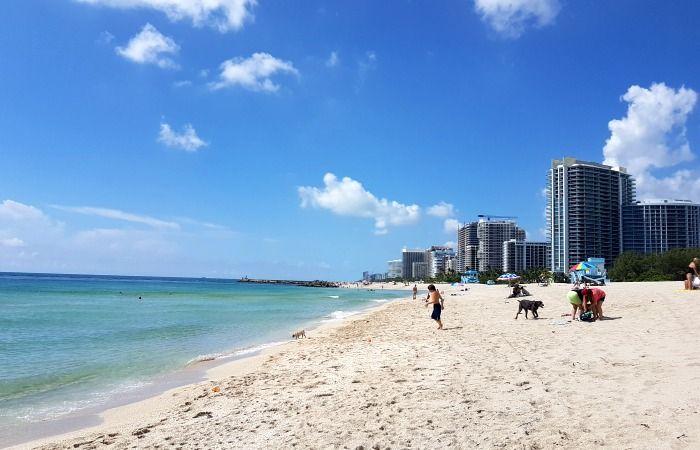 playas petfriendly miami