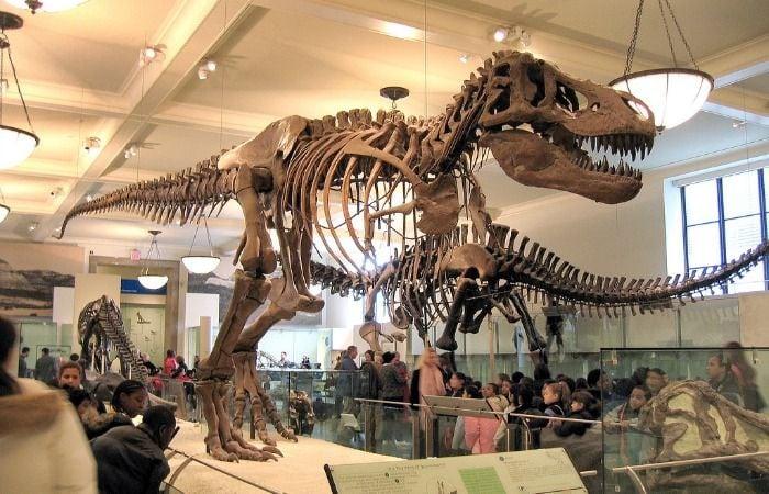 Museo Americano de Historia Natural gratis
