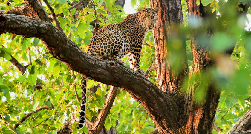 ▷ 9 Best Wildlife Holidays in the World I Top Places to see wildlife