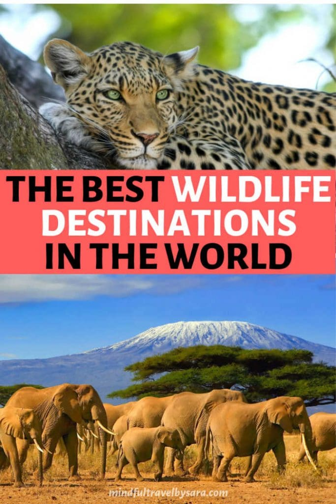 Best Wildlife destinations in the World