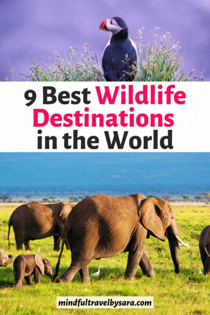 Wildlife destinations