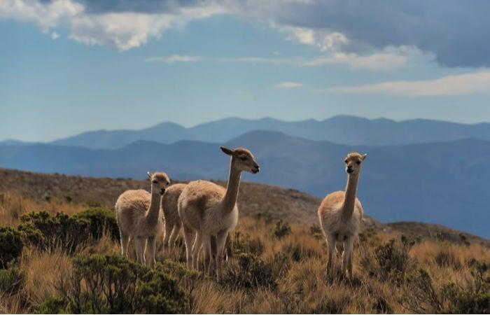 argentina tourist sites
